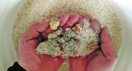 发霉的大米属于什么垃圾 生虫的大米垃圾分类