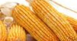 玉米棒子属于什么垃圾?