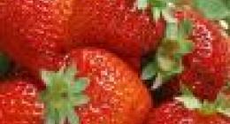 草莓是什么垃圾?
