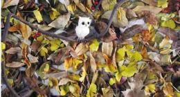 废弃的枯树叶属于什么垃圾