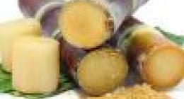 甘蔗是属于什么垃圾?
