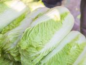 白菜是属于什么垃圾 白菜垃圾分类
