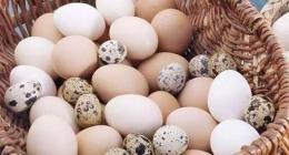 蛋属于什么垃圾
